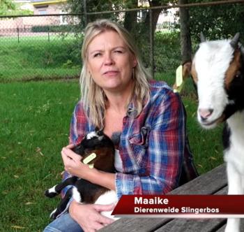 Vrijwilliger Maaike van Dierenweide Slingerbos verteld..